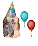 HAPPY BIRTHDAY (MASTIFF LOOK)