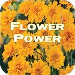 Coreopsis Flower Power