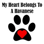 My Heart Belongs To A Havanese
