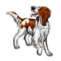 Irish Red and White Setter Products