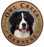 Owl Creek Bernese