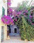 Flowers of Purple, Photo / Digital Painting