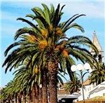 Palm Tree Beauty, Photo / Digital Painting