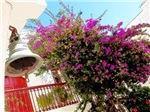 Bell Flowers, Photo / Digital Painting
