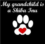 Shiba Inu Grandchild