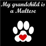 Maltese Grandchild