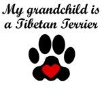 Tibetan Terrier Grandchild