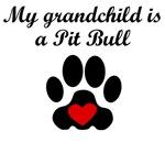 Pit Bull Grandchild
