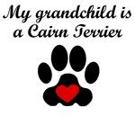 Cairn Terrier Grandchild