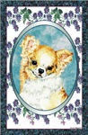 Long Coated Chihuahua Designer Style Gifts Items