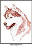 Red Siberian Husky Open Edition Gifts Products