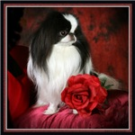 Japanese Chin & Rose Gifts and Products
