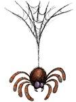 Spider n' Web
