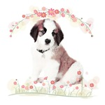 Saint Bernard Flowers