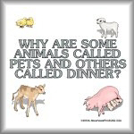 Why are some animals called pets & others dinner?