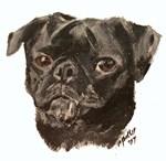 Pug..Black