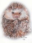 Hedgehog I