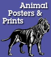 Animal Prints & Posters