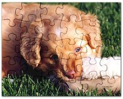 Toller Jigsaw Puzzles