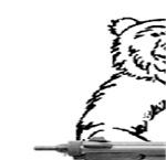 Bear Humor