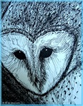 Barn Owl, nature art