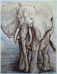 Elephant, wildlife art