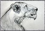 Lion! Wildlife, animal art!