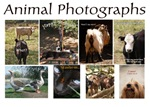 Animal photographs