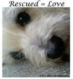 Rescued = Love