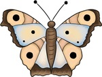 Cool Brown Butterfly