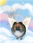 ANGEL IN THE CLOUDS<br>& Pomeranian  #8
