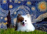 STARRY NIGHT<br>& Pomeranian (red/white)