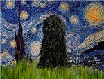 STARRY NIGHT<br>& Puli