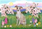 BLOSSOMS<br> & Italian Greyhound