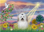 CLOUD ANGEL<br>& Coton de Tulear