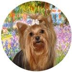 Yorkshire Terrier # 7<br>Garden at Giverney