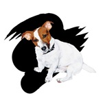 Jack Russell Image From Banner (on black)