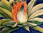 TROPICAL FLORALS: lotus & flowers of Bali