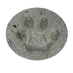 Real Cat Track