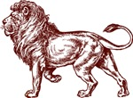 Cool Lion Illustration
