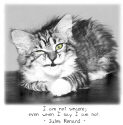 Insincere Cat-And-Quote Stuff
