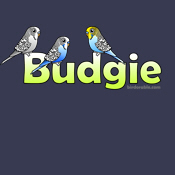 Cute Birdorable Budgie