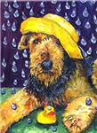 Household Airedale Terrier images