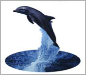 DOLPHIN GIFTS FOR DOLPHIN LOVERS