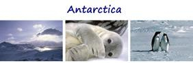3 Antarctic Pictures  - Set 1