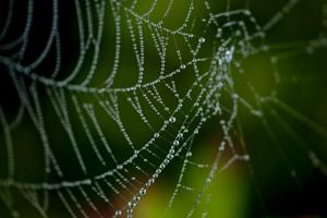 Heavy Morning Dew on a Spider Web