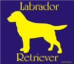 Big yellow on blue labrador