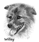 Willey