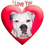 Valentines American Bulldog