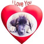 Valentines Leonberger